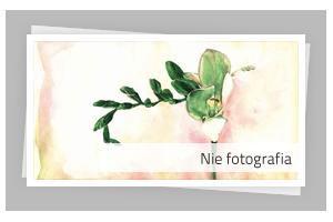 Portfolio - Nie fotografia